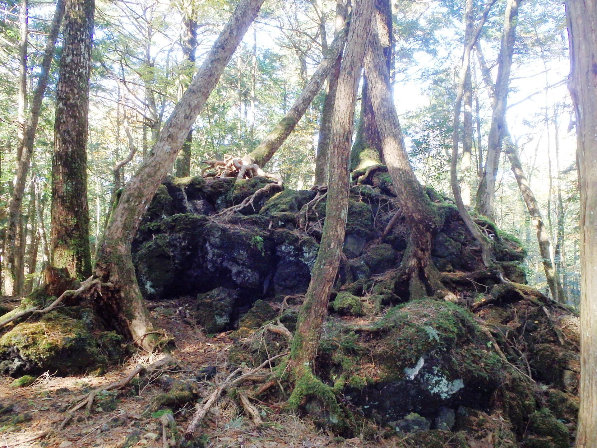 http://www.yamanashi-kankou.jp/blog/L43T9j_9.jpg