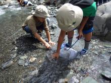 川の生き物探し
