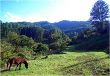 森のガイドウォーク