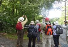 山中湖エコウォーク ハリモミ純林散策コース