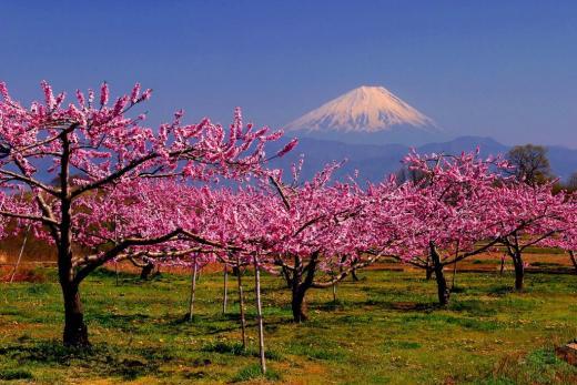 http://www.yamanashi-kankou.jp/kankou/spot/images/minamialpsmomo1.jpg